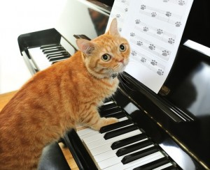 vmix cat keyboard